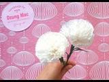 Carnation paper flower - cách làm hoa cẩm chướng bằng giấy gói bánh danisa