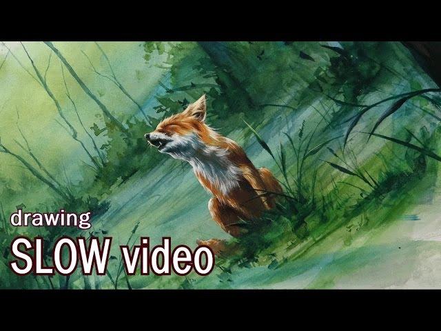Fox 부분영상, slow video