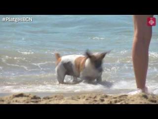 La platja de Llevant s'obre als gossos