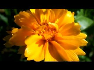 Цветы под музыку Garou- Красивая французская Музыка, Видео и Шансон