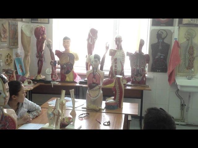 Анатомия: мышцы лица, шеи и т.д. 2/2