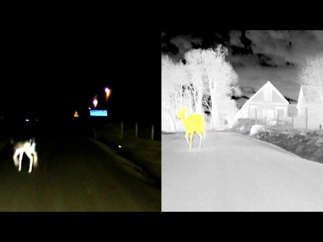 Night Vision with Dynamic Light Spot and animal detection - BMW Group