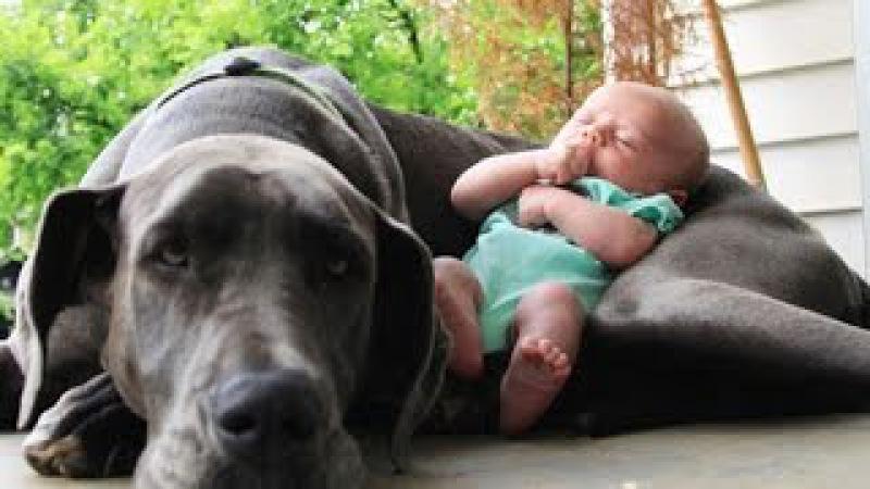 Собаки и дети, лучшие друзья. Dogs and Baby, the best video.
