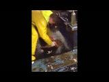 Рыбаки пытаются поднять электрического ската голыми руками