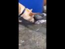Balığı Hayatta Tutmaya Çalışan Köpek