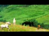 Евгений Алтайский-Вольный конь