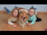 Бэкстейдж съемок для телеканала ANIMAL FAMILY HD