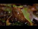 Документальный фильм про животных, Самые странные в мире животные