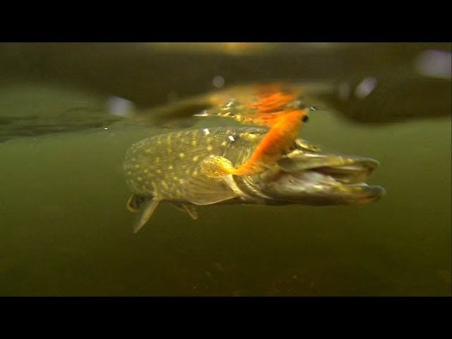 Very cool fish attacks. Рыбалка Атака щуки. Fishing lure for pike muskie bass perch zander.