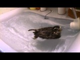 Owl Floating in the Sink Bath Time
