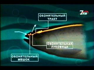 Диалоги о рыбалке - Ловля Кижуча №65