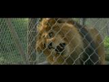 Мы купили зоопаркWe Bought a Zoo (2011) Международный трейлер №2 (дублированный)