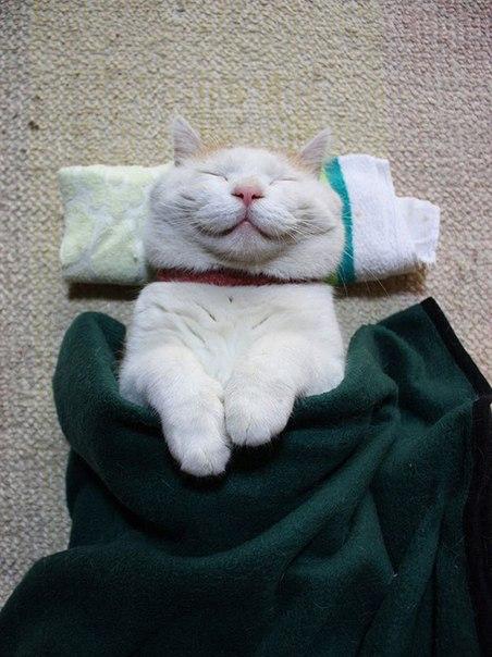 Картинки по запросу Этому Миру не хватает улыбающихся котиков