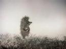 Riccio nella nebbia Ежик в тумане (с итальянскими субтитрами)