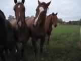 Какие-то лошадки мною заинтересовалисьНаверное, я хороший