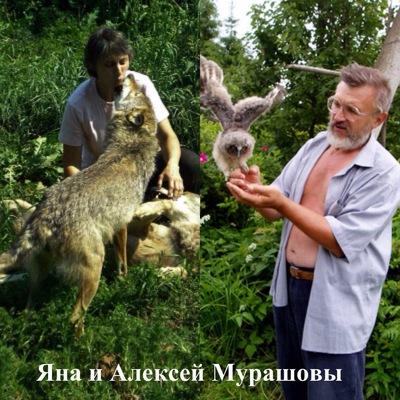 Алексей Мурашов