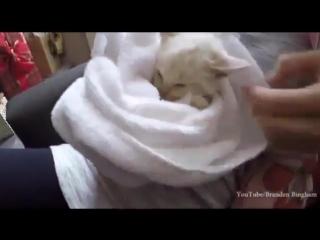 Семья нашла замерзшего котенка, и отогрела его
