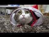 Самый смешной кот