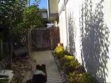 Lyla Jumps the Fence