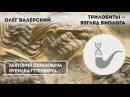 Олег Валерский - Трилобиты - взгляд биолога