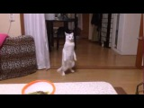 Майкл Джексон кот