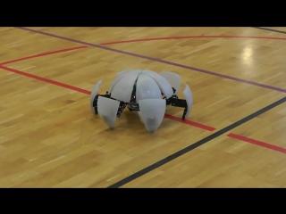 Возможно самый крутой робот в мире
