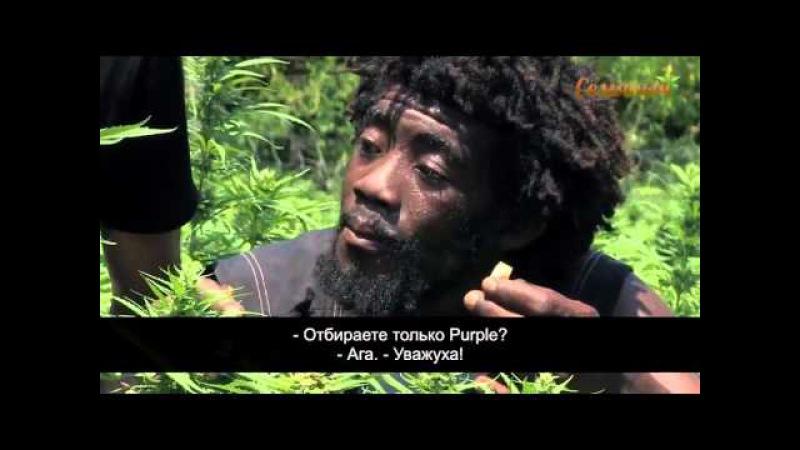 Strain Hunters - Экспедиция на Ямайку. Субтитры от Семяныча. 18