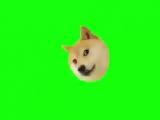 MLG Green Screen Doge dog Собака Футаж 1