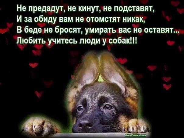https://pp.vk.me/c630424/v630424704/1d050/gGygzTg2EBk.jpg