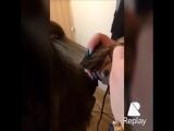 Полировка волос в Гринго