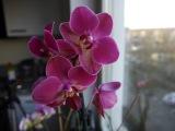 Орхидея уход I Пересадка орхидеи I Как правильно ухаживать I Фаленопсис
