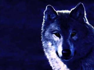АРМЕЙСКИЕ ПЕСНИ ПОД ГИТАРУ ►Блатной Удар   Одинокий волк