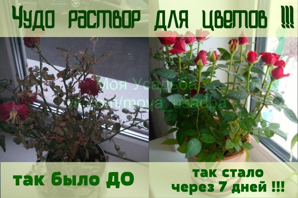 Комнатные растения погибают почему