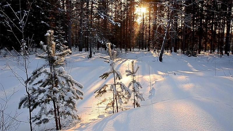 Безмолвный февральский лес