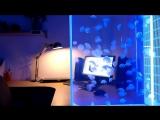 100 живых лунных медуз в потрясающем аквариуме с медузами Pulse 80! (1)