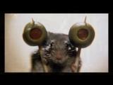 Мышиная охота-трейлер