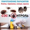 Уничтожение клопов в СПб. Уничтожение тараканов
