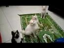 Perilaku Kucing Mendengar Kalimat Lailahaillallah