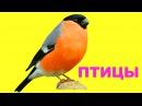 Учим голоса и названия птиц. Картинки для детей с птицами. Развивающие карточки...