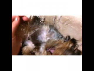 margo_shema video