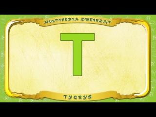 Multipedia Zwierząt. Litera T - Tygrys