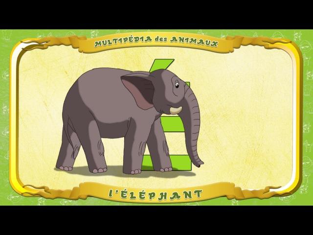 Multipédia des animaux. La lettre É - l'Éléphant