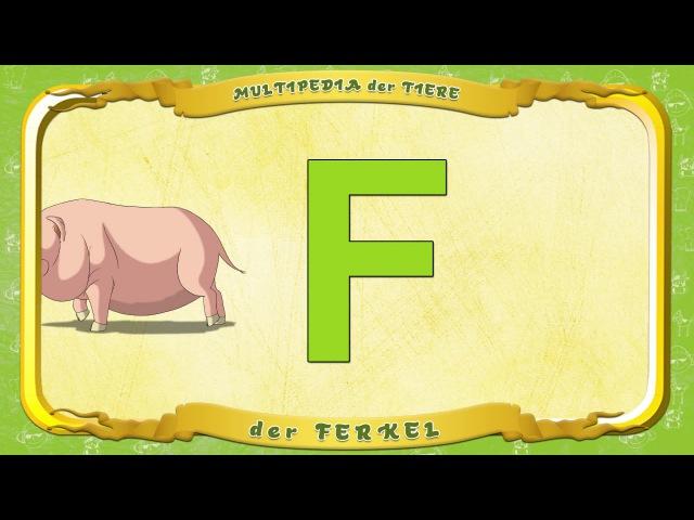 Multipedia der Tiere Buchstabe F das Ferkel