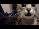 КОТ ИЗВРАЩЕНЕЦ Что он вытворяет... Ахаха ржака CAT PERVERT Funny Video Cat Jokes