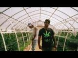 Ty Dolla $ign - Irie ft. Wiz Khalifa