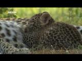 Необычный леопард (2012)