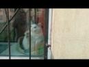 Это кот, питерский