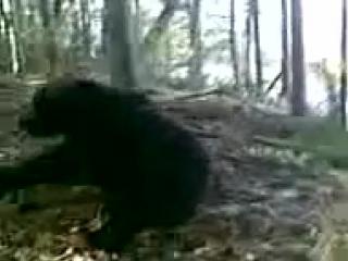 Охотники-(больные люди) поймали медведя в капкан и застрелили (Разве Мы человечество?)