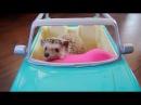 ТОП 5 лучшие видео про ежика. Смешной ежик. TOP 5 funny hedgehog