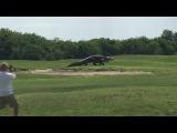 Прогулку гигантского аллигатора по полю для гольфа сняли на видео  Новости НТВ